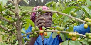 World Bank to Boost Support to Agriculture
